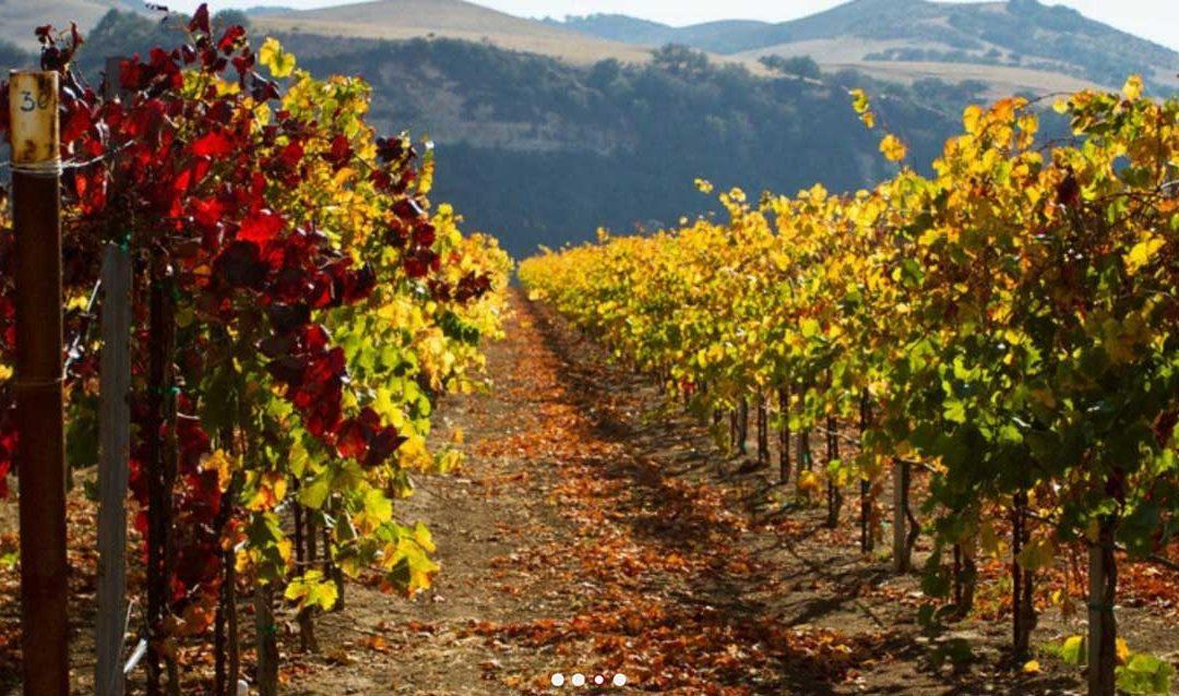 Best Santa Maria Wineries